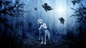 Predator Animal Forest 4281x2666 Wallpaper