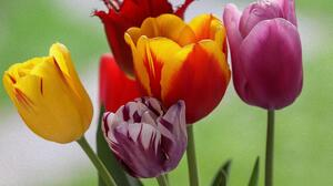 Artistic Colors Earth Flower Tulip 2732x2048 wallpaper