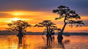 Cypress Silhouette Sunrise Tree 2000x1334 Wallpaper