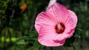 Flowers Plants Nature Sunlight Foliage Photography 5842x3625 Wallpaper