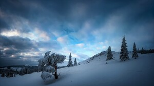 Tree Snow Cloud Sky 2048x1220 Wallpaper