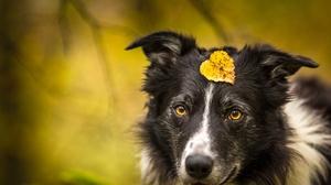 Dog Pet 3840x2563 wallpaper