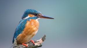 Bird Kingfisher Wildlife 2048x1365 Wallpaper