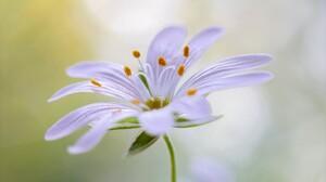 Earth Flower Macro White Flower 1920x1200 Wallpaper