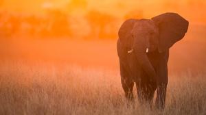 Depth Of Field Elephant Sunset Wildlife 5184x3276 Wallpaper
