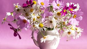 Cosmos Flower Pink Flower Pitcher White Flower 7242x5296 Wallpaper