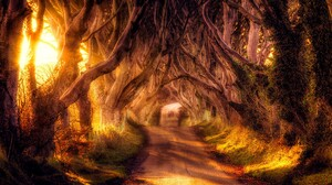 Road Tree Tunnel Canopy Tree Lined Sunbeam HDR 1920x1080 Wallpaper