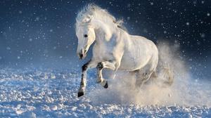 Animal Horse 3475x2317 Wallpaper