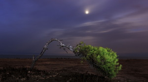 Landscape Lonely Tree Nature Night Tree 1920x1280 Wallpaper