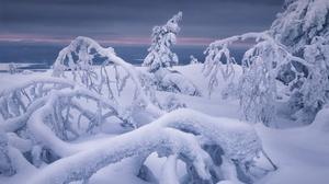 Cold Winter Nature Ice 2400x1600 Wallpaper