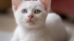 Baby Animal Cat Kitten Pet 2048x1799 Wallpaper