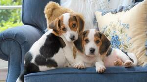 Chair Cute Dog Pet 1920x1200 Wallpaper