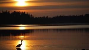 Bird Heron Sunset 2880x1800 wallpaper