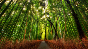 Bamboo Trees Nature Path Landscape Forest 3840x2160 Wallpaper