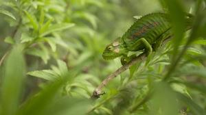 Lizard Reptile Green Wildlife 2048x1279 wallpaper