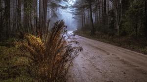 Fall Forest 3840x2160 Wallpaper