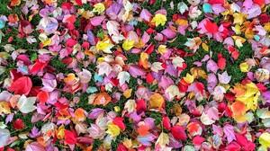 Colorful Fall Leaf 1920x1200 Wallpaper