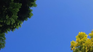 Sky Trees Leaves Nature 1080x1440 wallpaper
