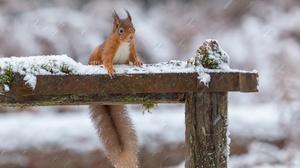 Depth Of Field Rodent Snowfall Squirrel Wildlife Winter 2048x1365 Wallpaper
