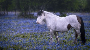 Blue Flower Horse 2400x1350 Wallpaper
