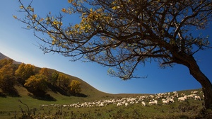 Hill Tree 2048x1365 Wallpaper