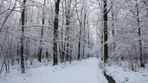 Winter Snow White Cold Forest 3840x2160 Wallpaper