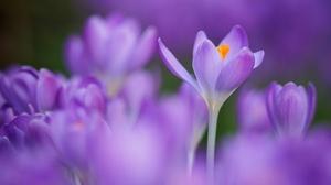 Flower Macro Nature Purple Flower 2048x1365 wallpaper