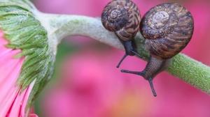 Macro Snail 5093x3484 wallpaper