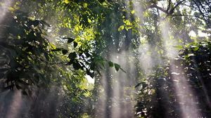 Canopy Forest Leaf Season Spring Sunlight 1920x1200 Wallpaper
