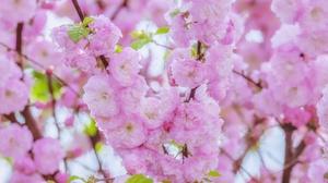 Blossom Close Up Nature Pink Flower Spring 4896x3264 Wallpaper
