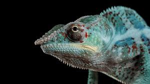 Animal Chameleon 2418x1360 wallpaper