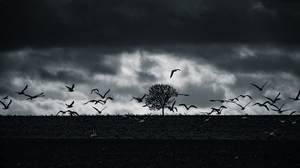 Bird Of Prey Monochrome Sky Storm Birds Trees Clouds 6151x3454 Wallpaper