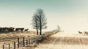 Elk Wildlife Fence Sunny 2048x1109 Wallpaper