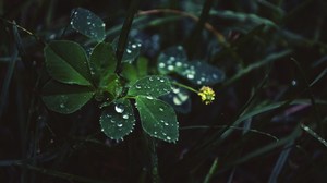Raindrops Yellow Flower 2560x1600 Wallpaper