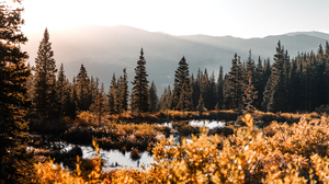 Landscape Forest Trees Mountains 3000x1544 wallpaper