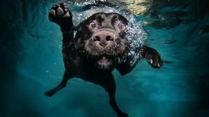 Dog Labrador Underwater Water 2560x1600 Wallpaper