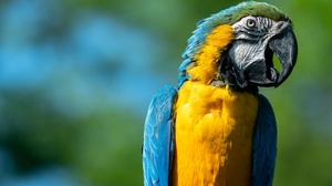 Bird Blue And Yellow Macaw Parrot Wildlife 2048x1365 wallpaper