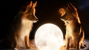 Dog Manipulation Moon Pet 2048x1346 Wallpaper