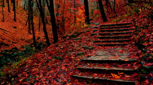 Stairs Steps Fall Park Tree Forest 1920x1325 Wallpaper