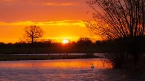 Sky Sun Cloud Sunset Bird Swan Pond 3840x2160 Wallpaper