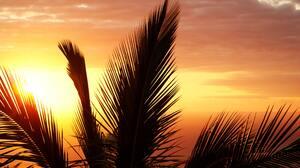 Palm Trees Sunset Beach Silhouette Ocean View 3872x2592 Wallpaper