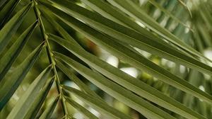 Close Up Plant 3840x2400 wallpaper