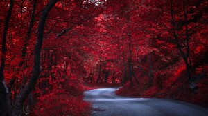 Nature Red Tree 1920x1200 wallpaper