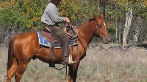Photography Horse Riding 2816x2112 wallpaper