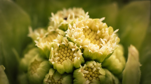 Green Yellow Yellow Background Green Background Plants Nature Macro Photography Flowers 1920x1080 Wallpaper