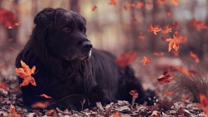Dog Fall Pet 3840x2160 wallpaper