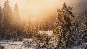 Forest Nature Snow Tree Winter 2048x1362 wallpaper