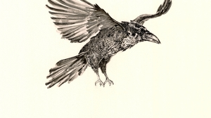 Animal Raven 5150x3892 Wallpaper