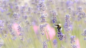 Bee Flower Insect Macro Purple Flower 2000x1125 Wallpaper