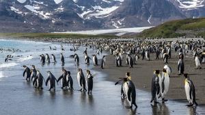 Penguin Wildlife 2560x1709 Wallpaper